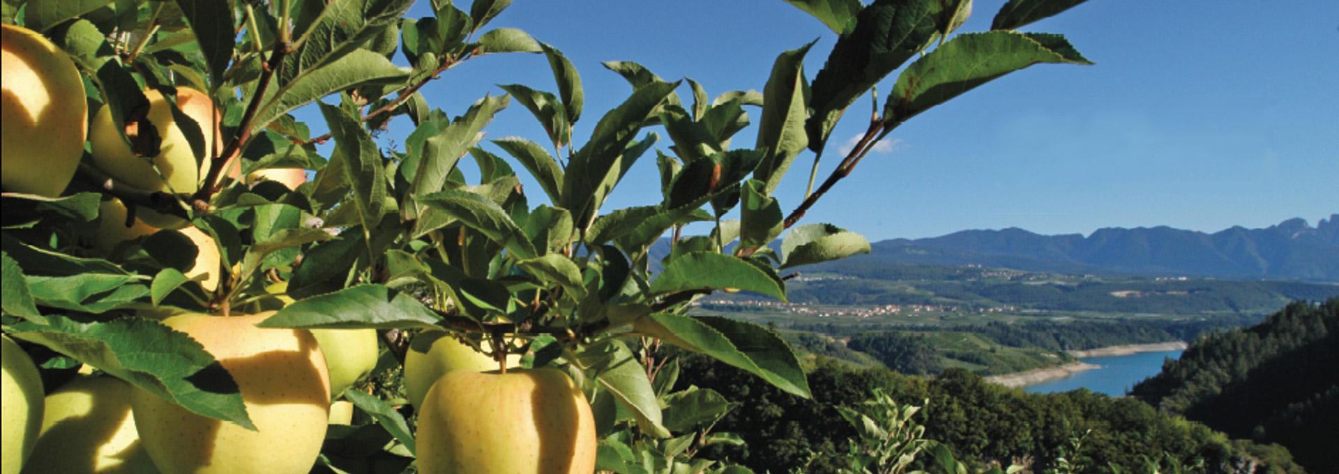 paesaggio mela